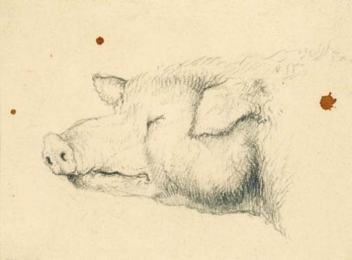 Edwin_Landseer_head_of_a_pig_1810